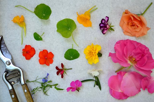 Overhead photo of edible flowers laid out on a white surface.