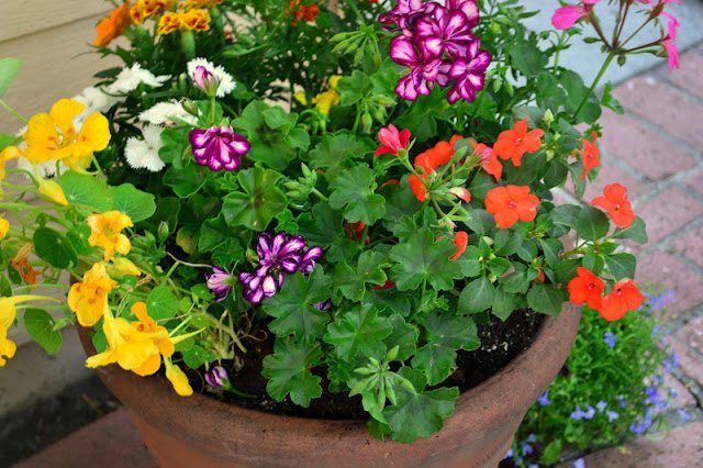 Photo of flowers in a planter.