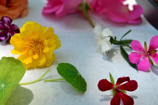 Close up photo of edible flowers laid out on a white surface.
