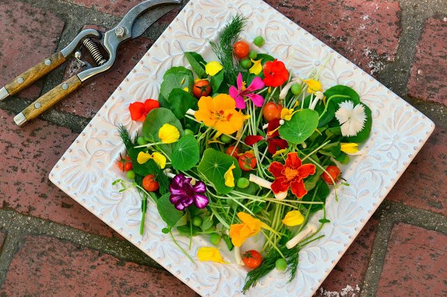 Overhead photo of edible flowers on a white plate on a brick surface.