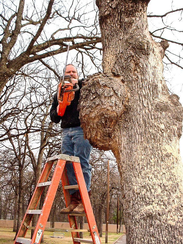 Cutting a burl