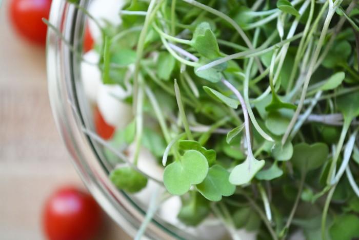 micro basil in a Caprese Salad
