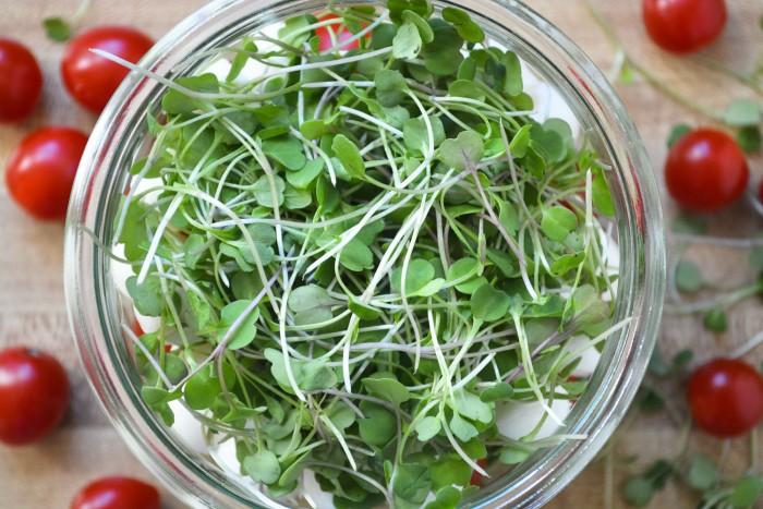 caprese salad with micro basil
