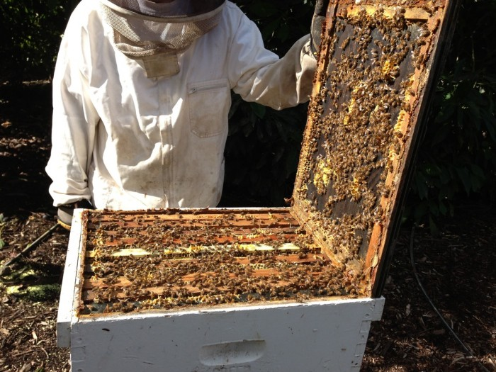 Bloom hives