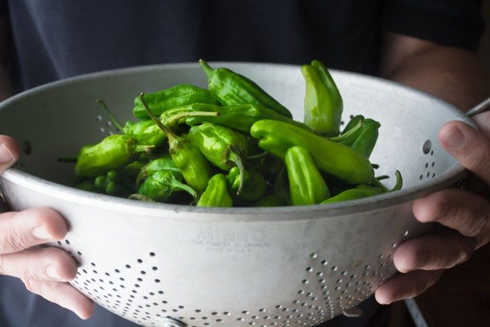 Photo of hands holding a white colander filled with shishito peppers.