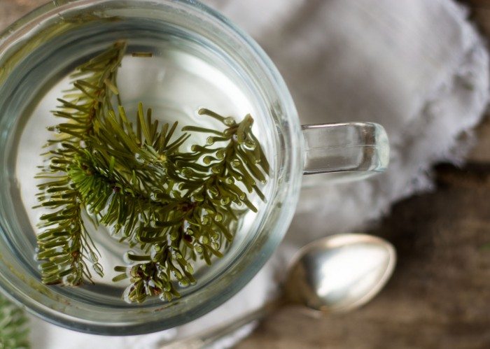 A Healing Conifer Tea made with Spruce needles is a natural cold and flu soother