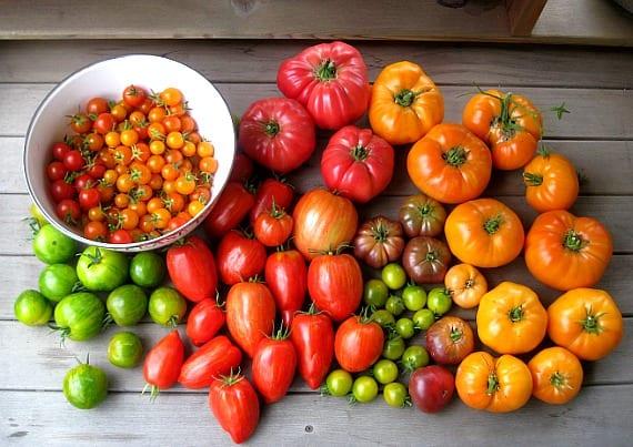 American Artisans SmartSeeds | heirloom Tomatoes
