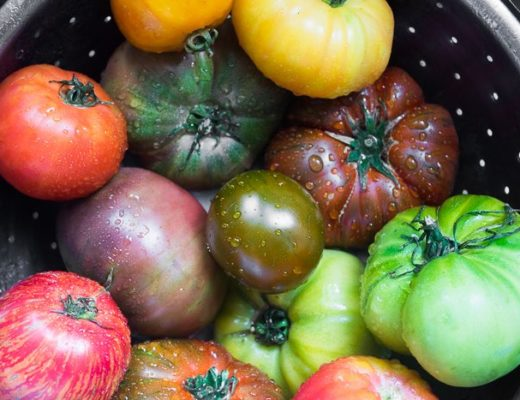 Photo of heirloom tomatoes in a colander for basil salad with heirloom tomatoes.