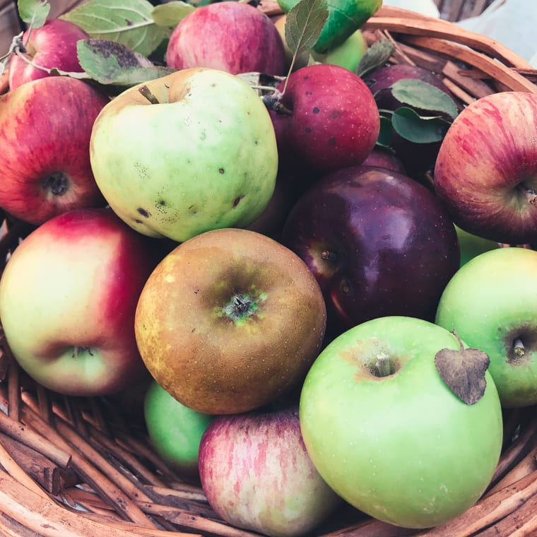fresh fall apples in a basket