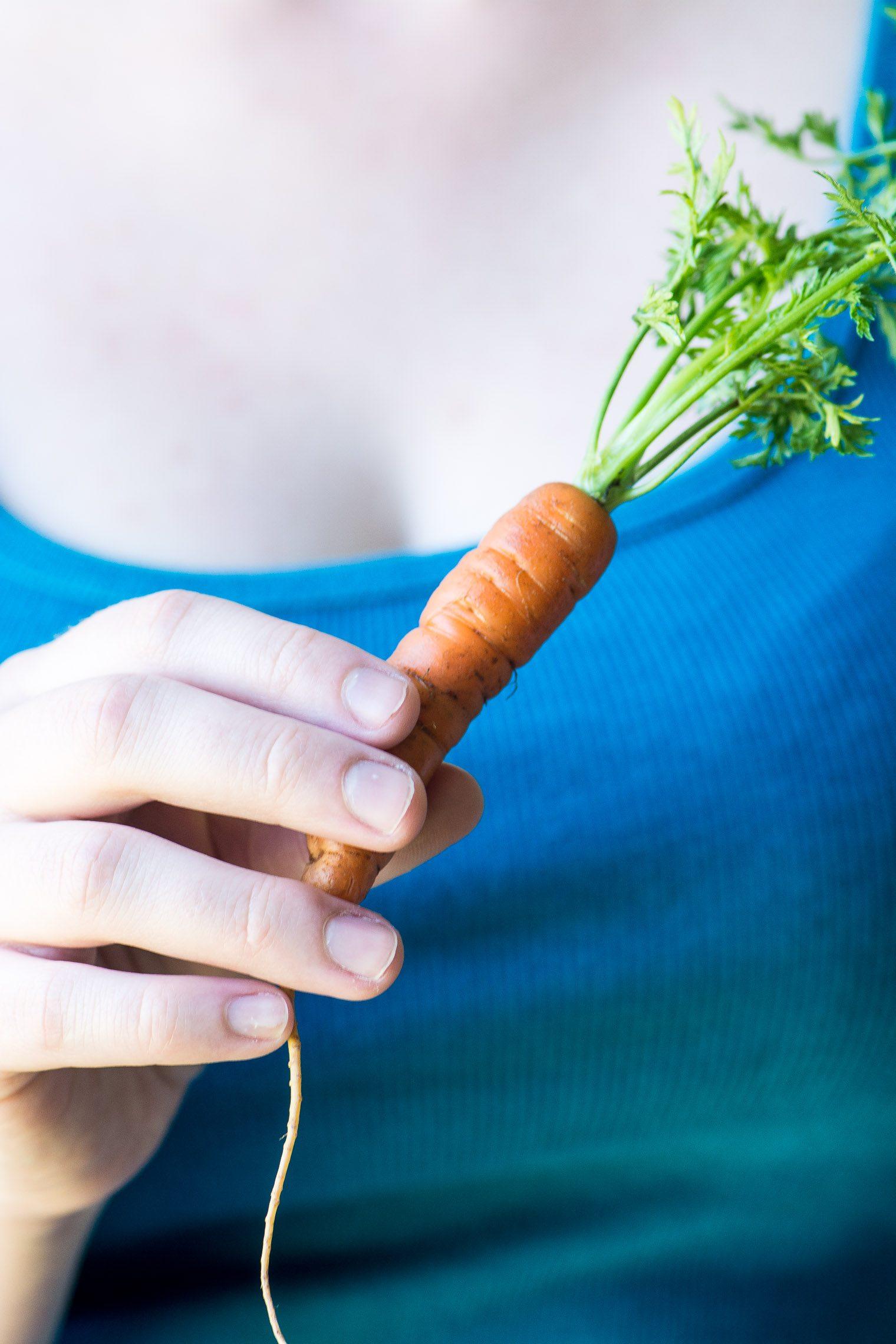 A spring carrot