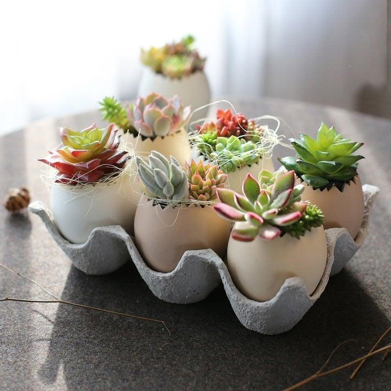eggshell succulent planter