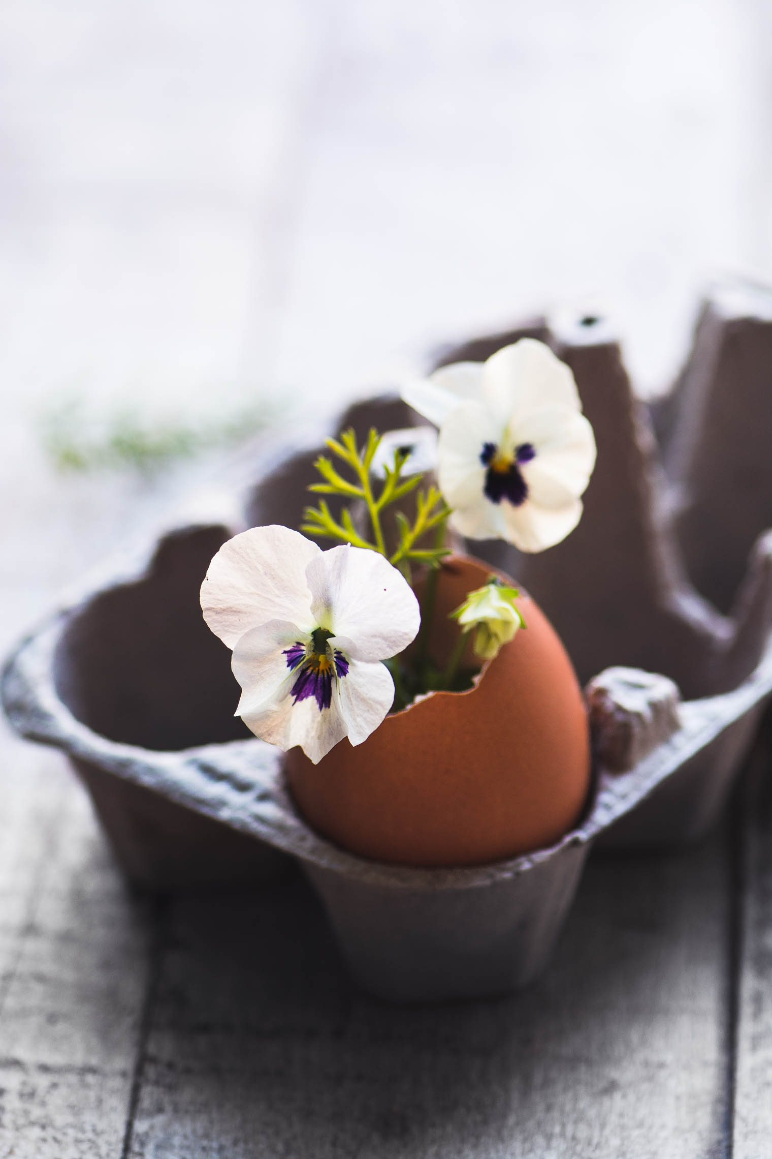 An eggshell vase with flowers sitting in an egg carton.