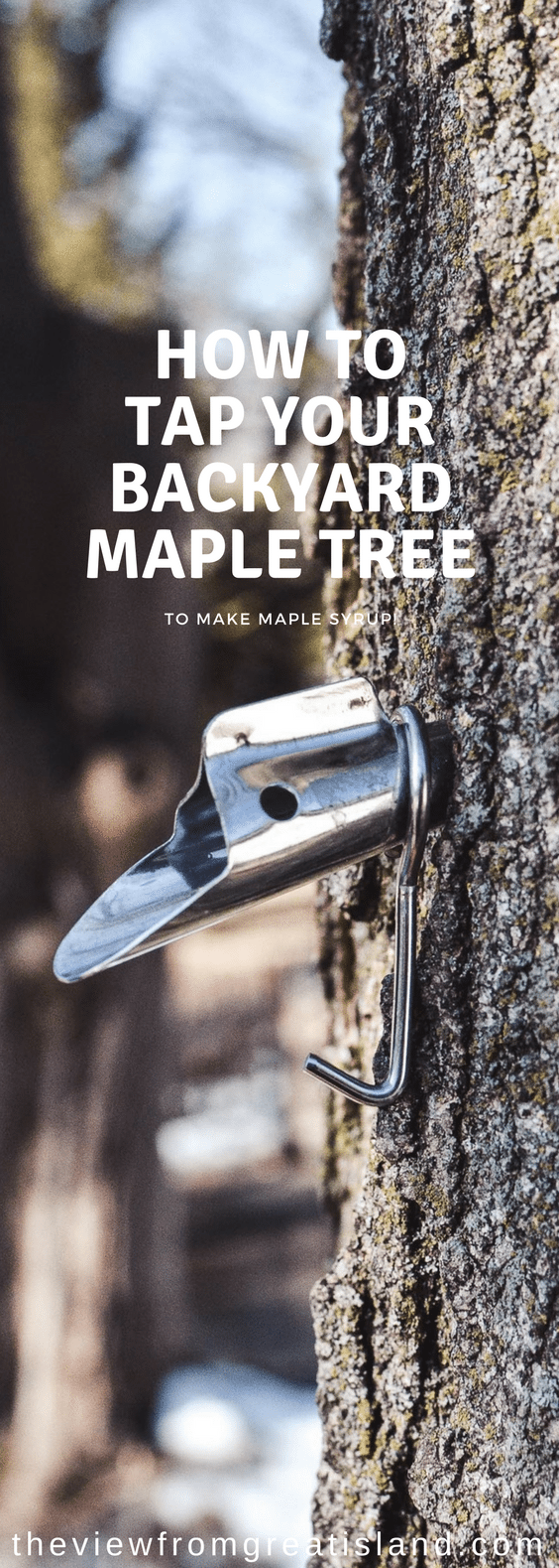 You can make maple syrup at home! If you've got a sugar maple tree in your yard (or a neighbor who's willing to share) you can tap it and make your own amazing maple syrup. #maplesugaring #mapletapping #maple #maplesyrup #homemademaplesyrup #diymaplesyrup #sugarmaple