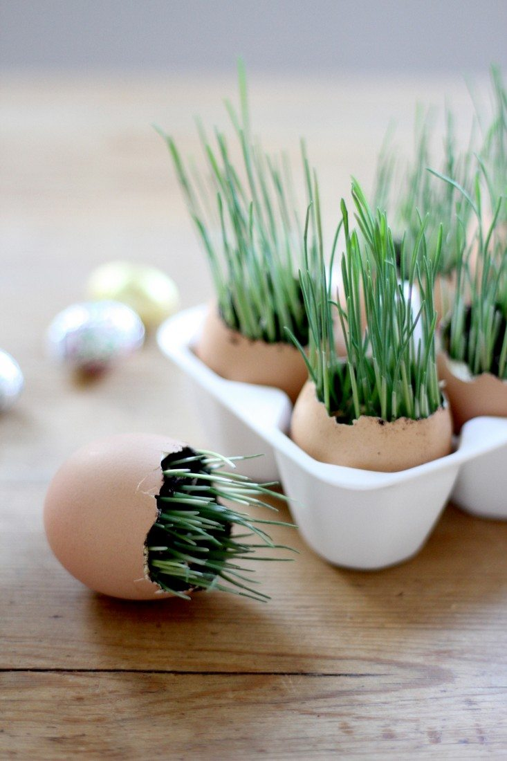 Growing grass seedlings in eggshells