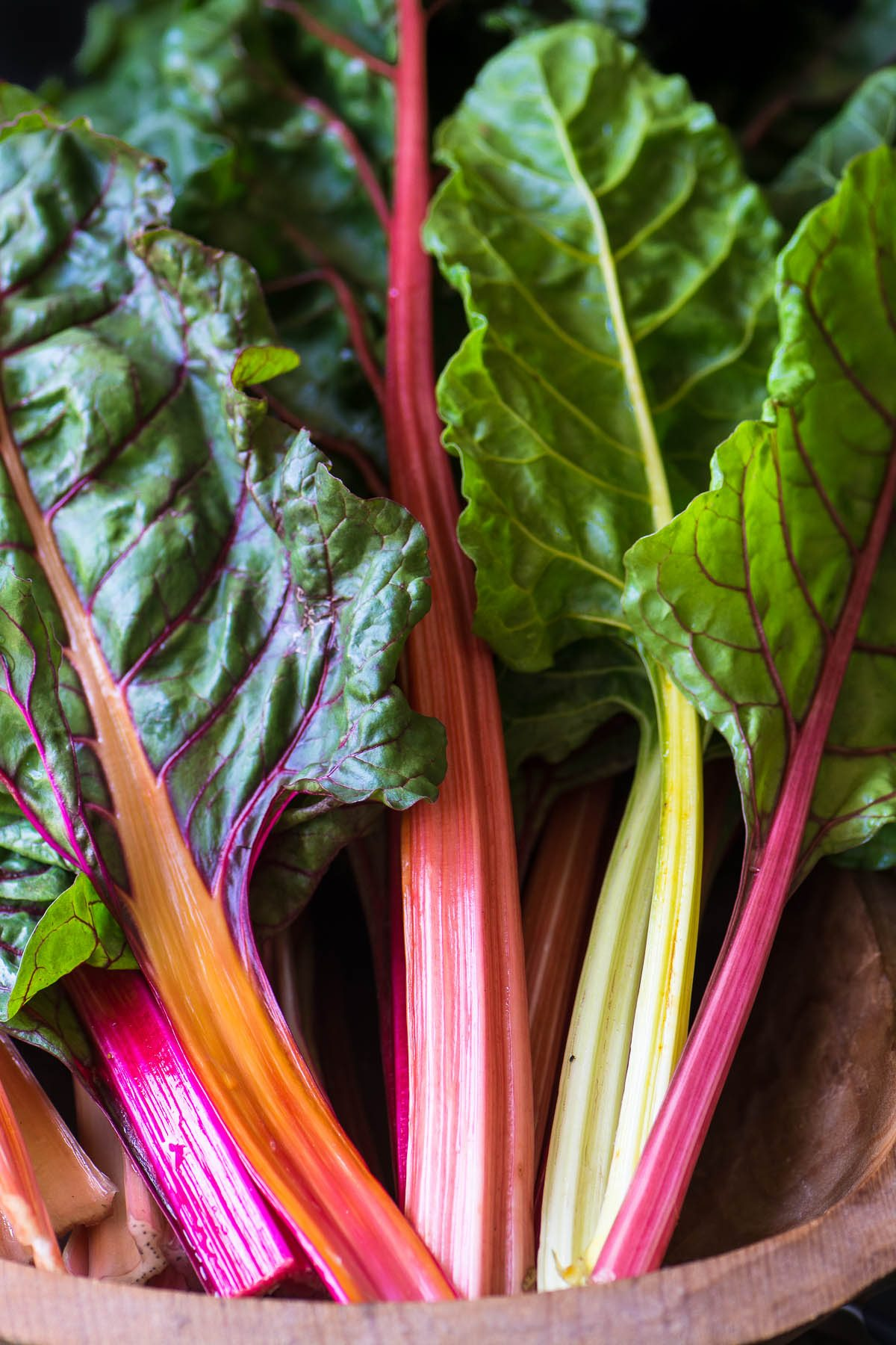 stalks of colorful rainbow chard