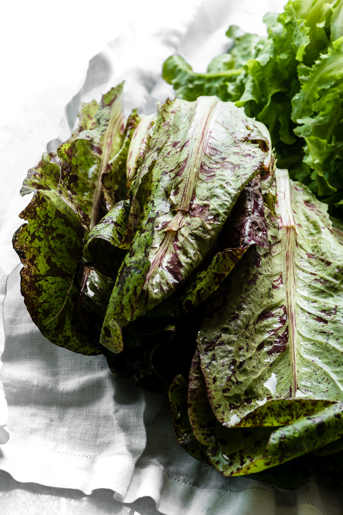 Lettuce for Spring Salad with Tarragon Dressing