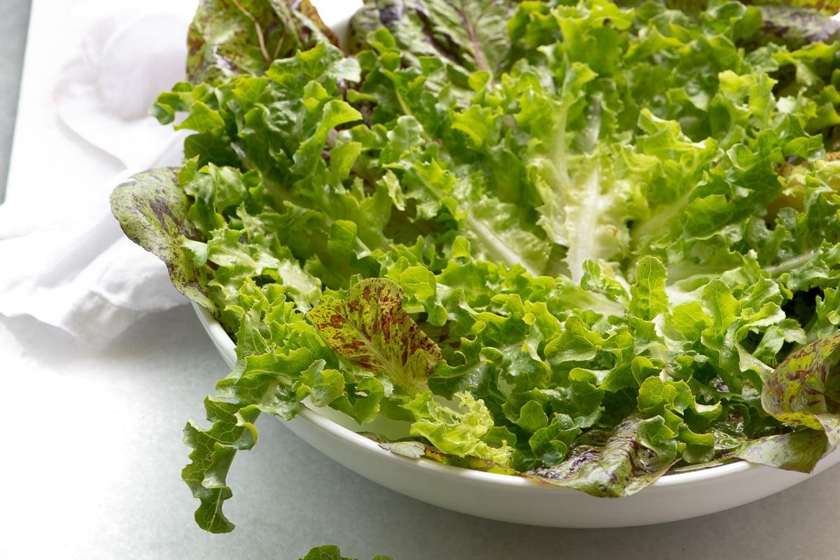 Lettuce for a spring salad