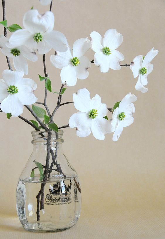 dogwood branches in a glass bottle
