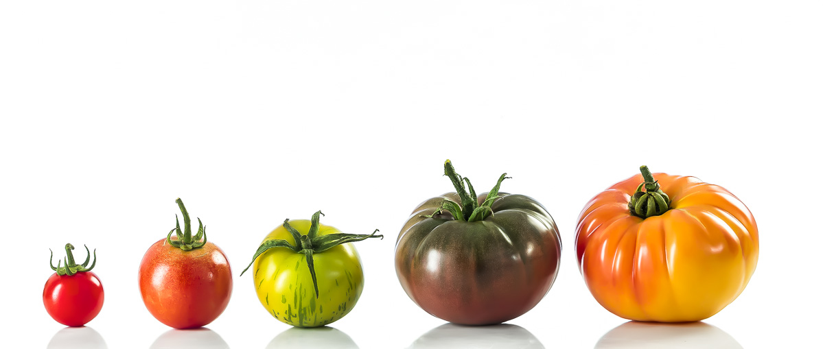 a lineup of heirloom tomatoes