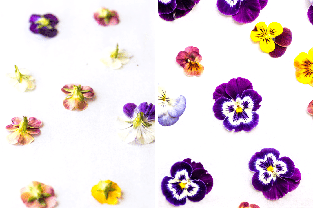pressing pansies for pansy topped shortbread cookies