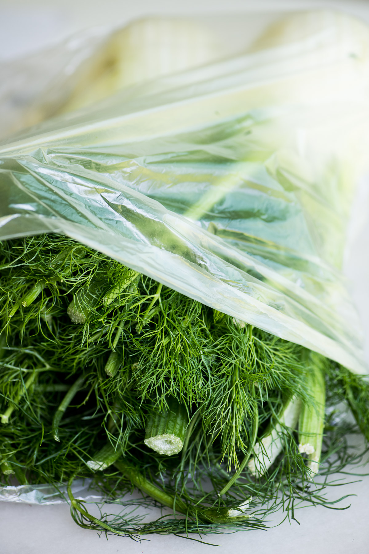 bulbs of fresh fennel, in a plastic bag