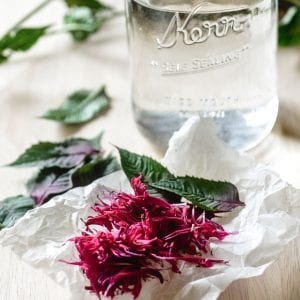making bee balm tea with filtered water and bee balm blossoms