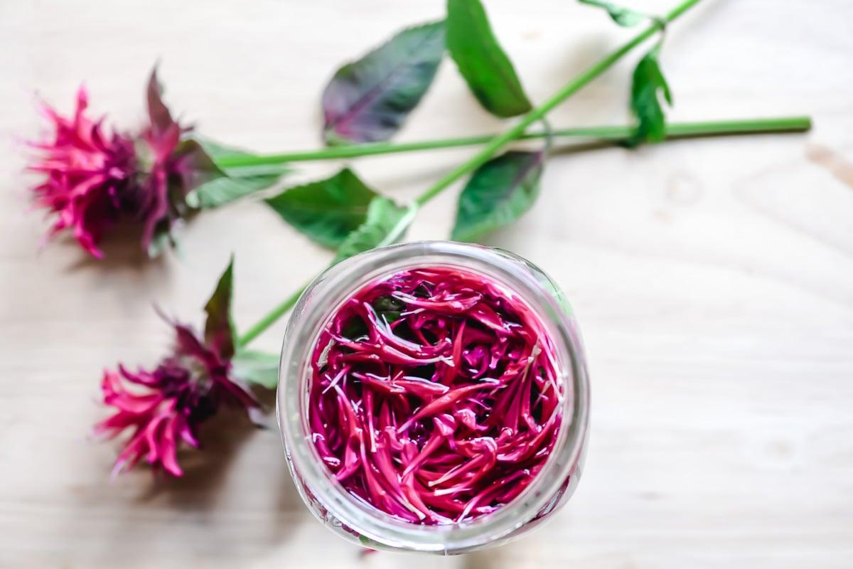 scarlet bee balm petals for sun tea