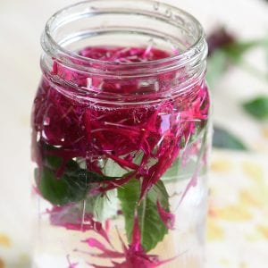 bee balm blossoms in a jar of water