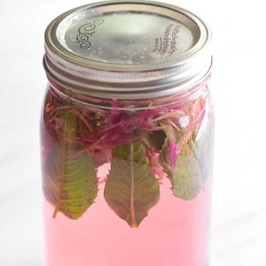 Bee balm cold brewing in a glass jar