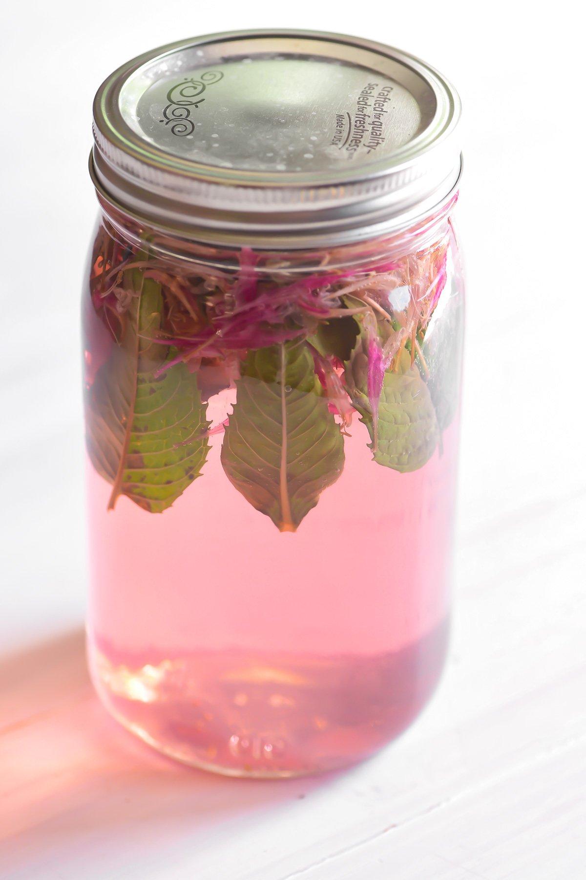 Making bee balm sun tea in a mason jar