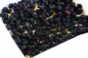 blackberries over shortbread crust