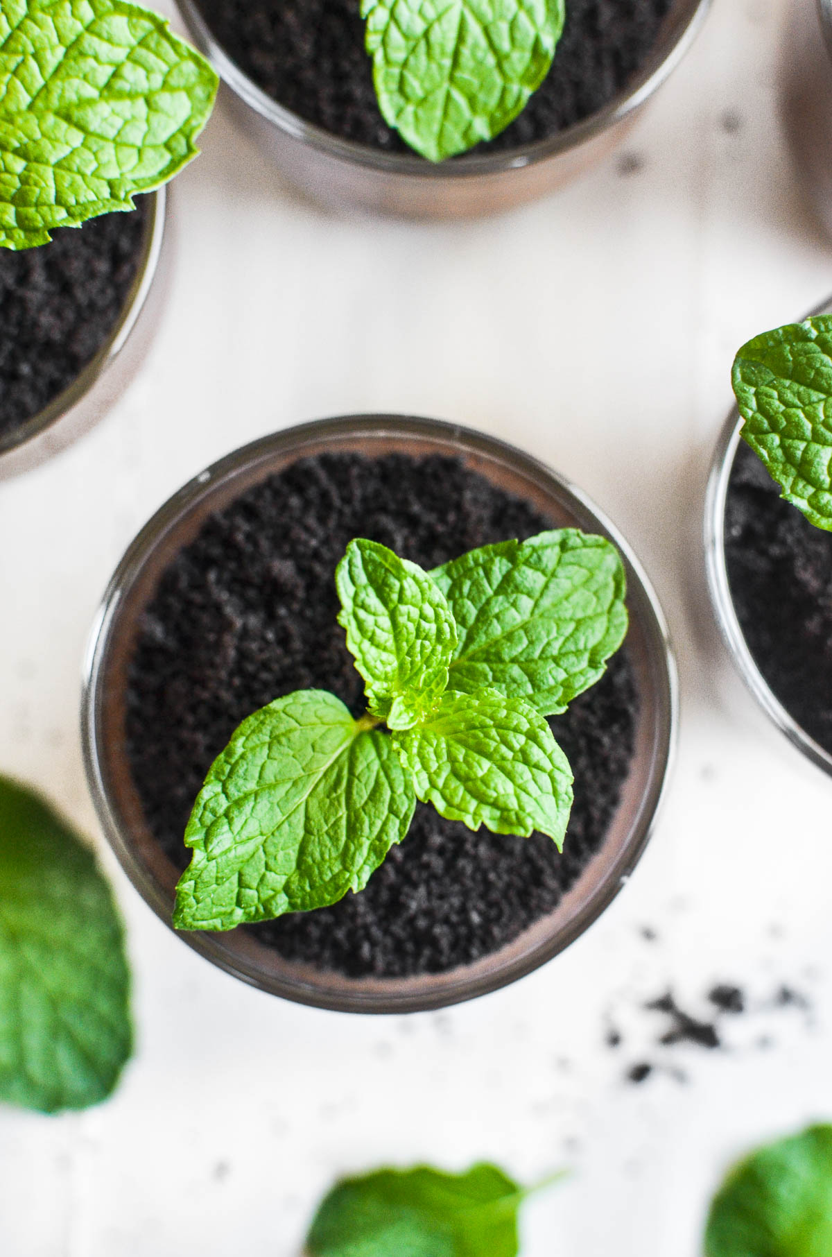 Overhead picture of mint chocolate pudding pots with mint seedlings.