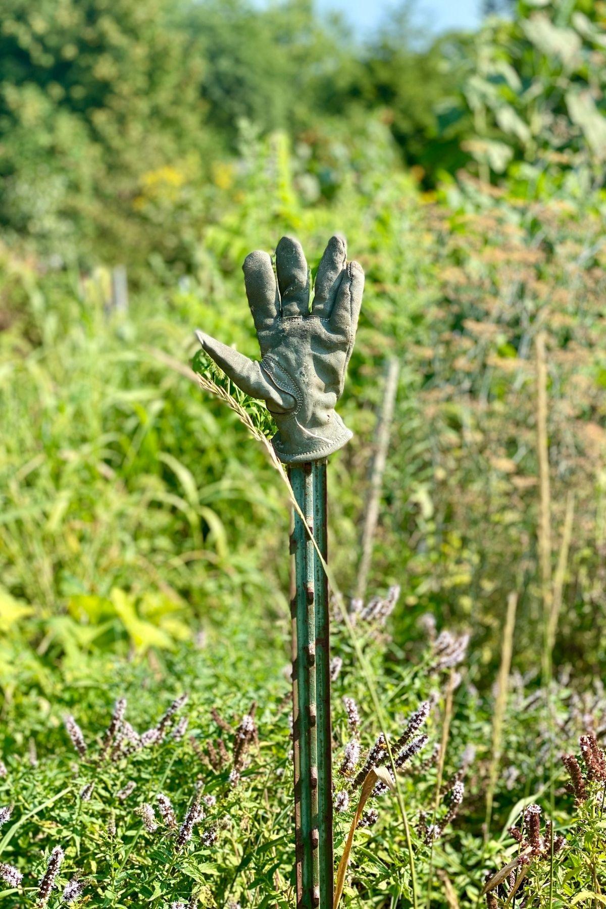 garden glove on stake